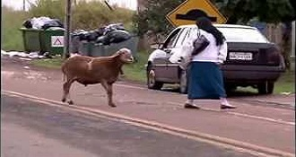 A Sheep Terrorizing Citizens in a Town