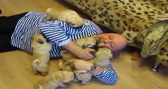 Man Attacked by Pug Puppies