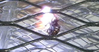 Electric Bug Zapper in Slow Motion