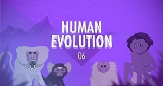 Human Evolution Crash Course