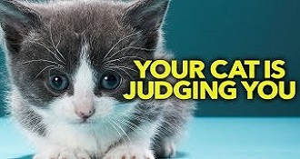 Your Cat Is Judging You