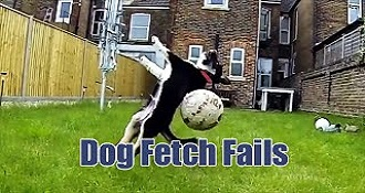 Dogs Have No Idea How to Play Fetch