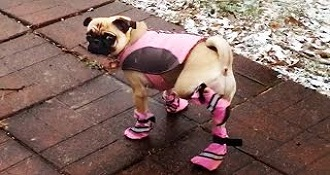 Dogs Wearing Bootie Slippers Compilation