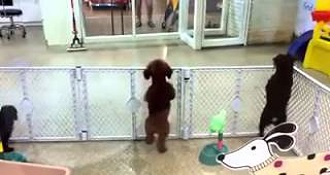 Excited Puppy Spots its Owner