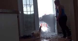 Cat Jumps Through Snowbank To Get Inside House