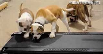 Dogs Havent Figured Out The Whole Treadmill Thing