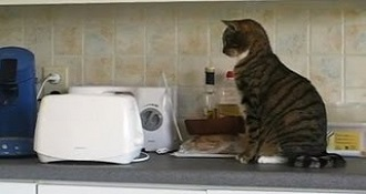 Cats Frightened by Toasters
