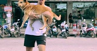 The City Looking For Stray Dogs