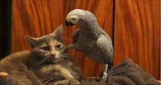 This Cat Has Had Enough Of This Parrot's Bullsht