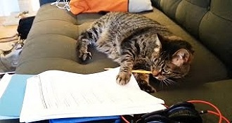Cats Helping With Homework