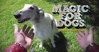 Magic for Dogs GoPro Edition!