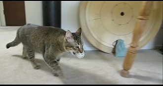 Pet Owner Builds Cat Feeder That Cat Must Catch 'Prey' To Turn On
