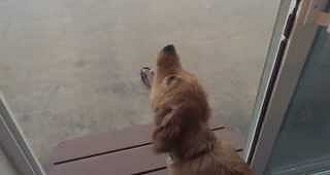 Puppy Tries To Drink Falling Rain
