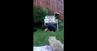 Toddler Adorably Fails At Gathering Kittens