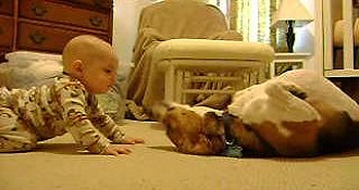 Beagle Meets Baby For First Time