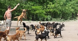 450 Dogs In A Sanctuary