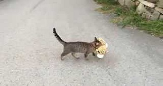 Cat Adorably Steals Tiger Stuffed Animal