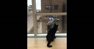Cat Plays With Window Washer