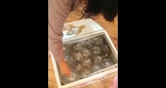 Woman Freaks Out After Receiving 40 Fish In The Mail