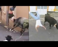 Ozzy Man Reviewing People Getting Slammed By Bulls