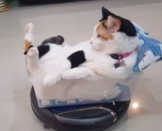 Just A Cat Riding A Roomba In Style