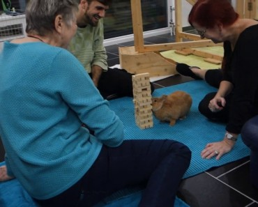 Bunny Playing Jenga