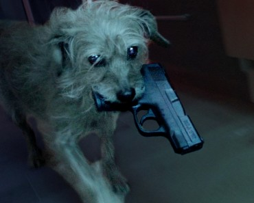 Dog Wick Is Like John Wick But About The Dog